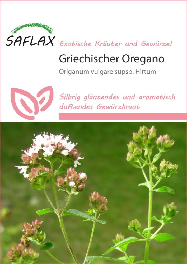griechischer oregano oregano kr uter heilpflanzen. Black Bedroom Furniture Sets. Home Design Ideas
